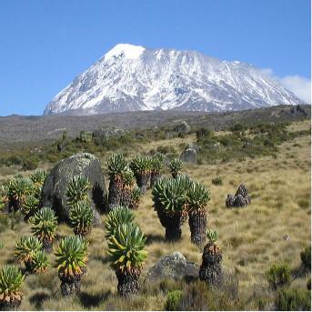 7 Days Africa Tour : Kalimanjaro Climb – Marangu Route