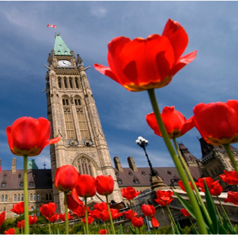 8D America & Canada Tour : Niagara Falls – New York – Washington D.C –Toronto - Montreal